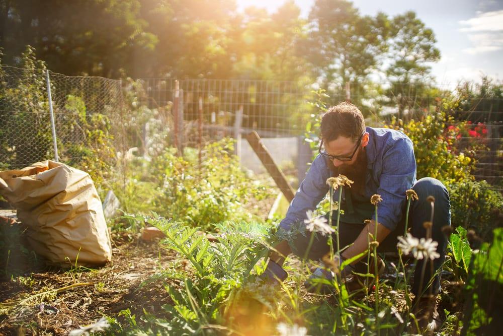 gardening ecotherapy